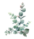 Watercolor vector bouquet with green eucalyptus leaves and branches. - 185786266