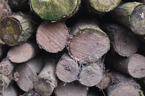 Poster Brandhout textuur pile of logs