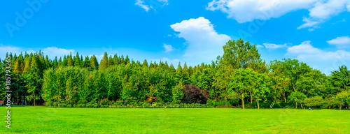 Fotobehang Lime groen Park Green Grove