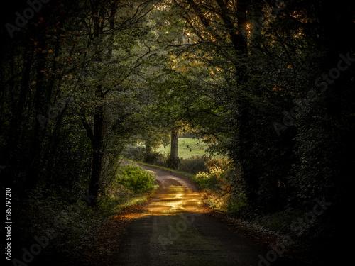 Papiers peints Route dans la forêt Route de terre au coucher du soleil