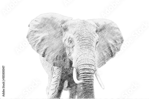 Elephant. Sketch with pencil - 185800047