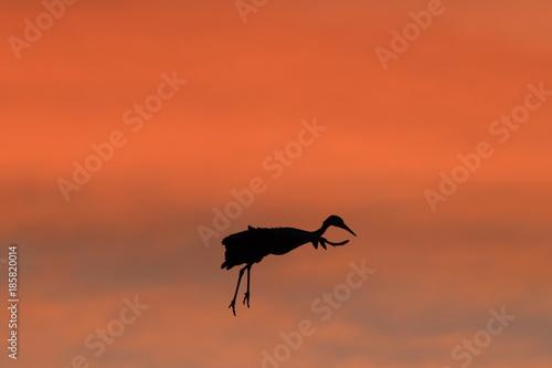 In de dag Baksteen Sandhill Crane Bosque del Apache Wildlife Reserve New Mexico USA