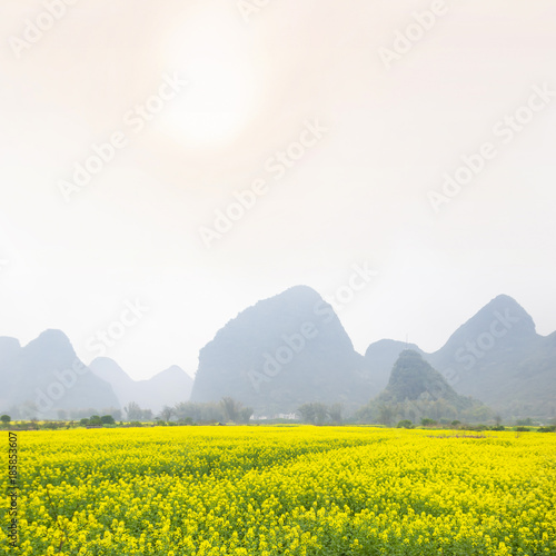 Poster Guilin Oilseed rape field in spring, located in Yangshuo County, Guilin, Guangxi, China.