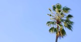 Single palm tree in Los Angeles being blown about in the wind. Recorded at 4K. - 185859017