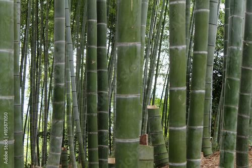 Aluminium Bamboe foresta di bambu