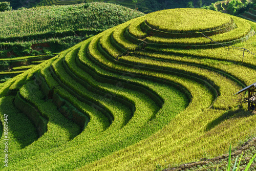 Staande foto Pistache Terraced rice field in harvest season in Mu Cang Chai, Vietnam. Mam Xoi popular travel destination.