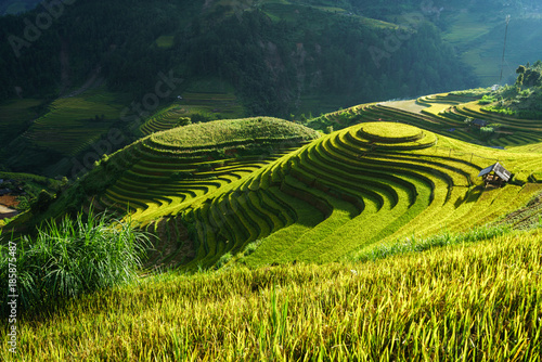 Tuinposter Groen blauw Terraced rice field in harvest season in Mu Cang Chai, Vietnam. Mam Xoi popular travel destination.