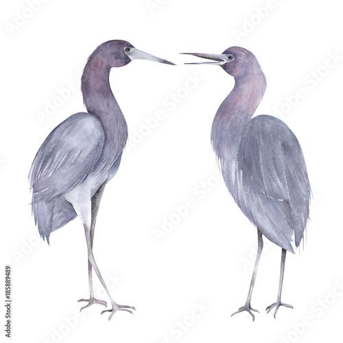 Little blue heron couple. Hand drawn isolated illustration - 185889489