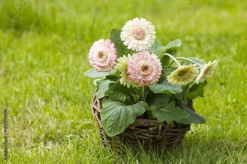Fotobehang Gerbera gerbera flowers in a basket