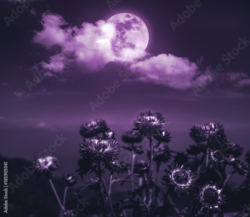 Poster Aubergine Nighttime sky with clouds and full moon with shiny.