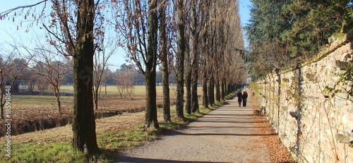 Foto Murales Amici che camminano nel parco - inverno