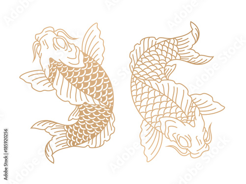 Koi fish. Japanese carp fish. Vector illustration © mchlskhrv
