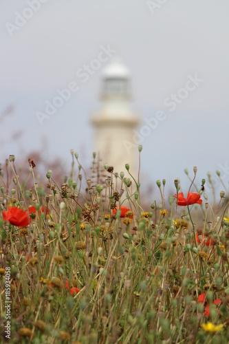 Fotobehang Klaprozen Leuchtturm im Mohnfeld