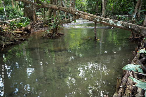 Fotobehang Khaki stream in forest look very cool and peace