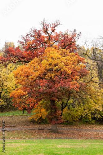 Papiers peints Automne Autumn Oak