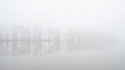 Foggy reflection trees and lake
