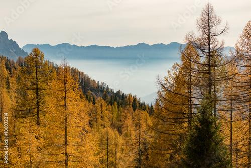 Dolomiti - 186032214