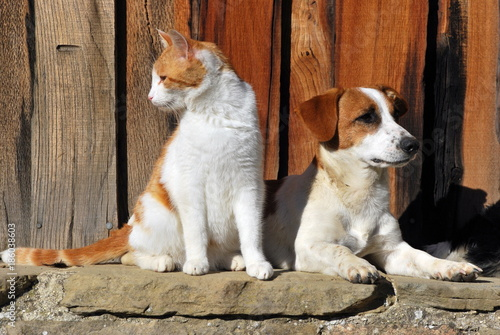 Cat and Dog together - 186038603