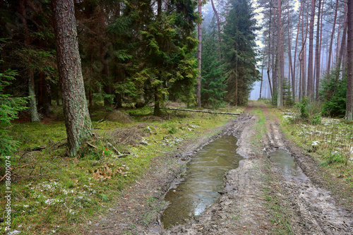 Road in forest mroźny poranek w lesie na Warmii