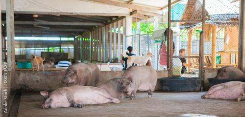 Foto op Aluminium Oude verlaten gebouwen wild boar at the cage