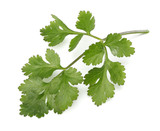 coriander leaves isolated on white background - 186085282