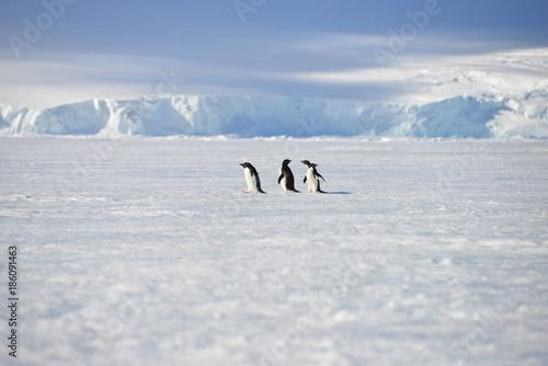 Foto op Aluminium Antarctica Antarctica pinguins sky