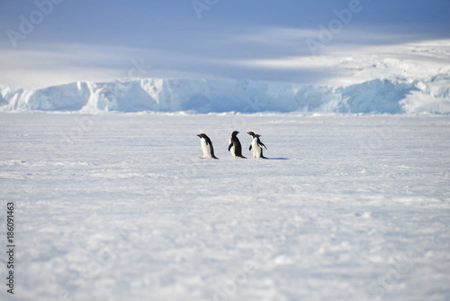 Foto Spatwand Antarctica Antarctica pinguins sky