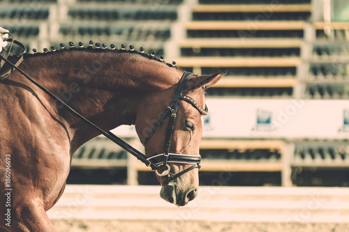 Fotobehang Paarden Horse in competition at a tournament in portrait