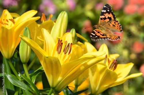 Fotobehang Honing Schmetterling 261
