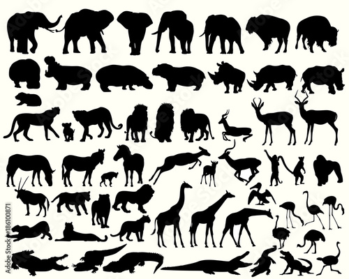 Fototapeta Collection of different animals on a white background