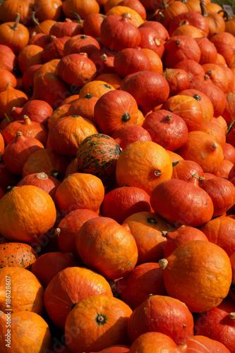 Pumpkins - 186128607