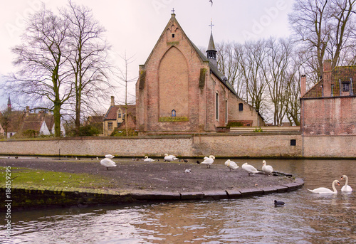 Tuinposter Zalm Free Swimming swans in Lake of Love Bruges Belgium