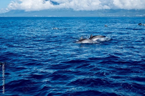 Fotobehang Dolfijn Spotted dolphins with Pico island in the background