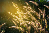 Close up flower grass with sunrise background. - 186170832