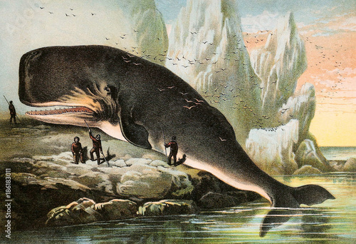 Illustration of mammals. - 186183011