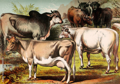 Illustration of mammals. - 186183078