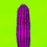 Cactus. Cactus lover Minimal design Fashion color - 186200805