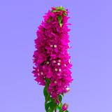 Plant Design. Plant Lover. Tropical Flower fashion art - 186202883
