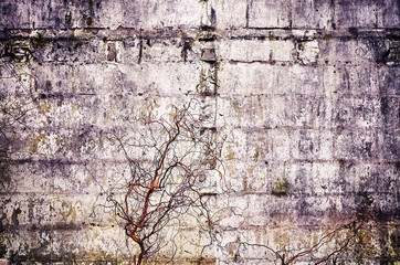Old concrete grunge wall with dried plants, vintage color toned abstract background or texture.