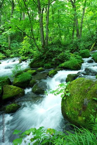 奥入瀬 初夏 緑 川 癒し 森 山 日本 風景 © 俊徳 葛間