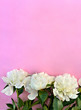 White peonies on a of pink paper background with space for text. Top view, flat lay.
