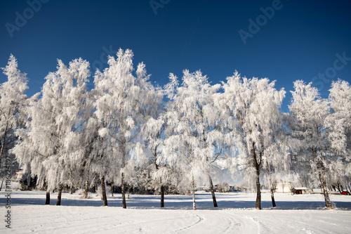 Foto Murales Frostiger Baum mit Eiskristallen im Winter, blauer Himmel