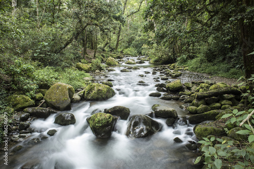 Fotobehang Olijf Jungle landscape with trees and a river