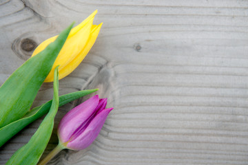 yellow and violet tulips on wooden ground