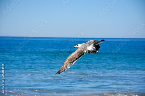 Gulls over sea and water Poster