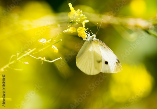 Butterfly on a yellow flower in the nature