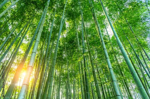 Plexiglas Bamboe bamboo forest. Nature background.