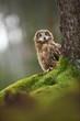 Bubo bengalensis. Autumn nature. Beautiful owl photo.