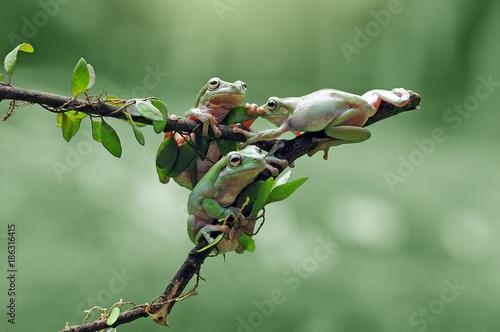 Aluminium Kikker dumpy tree frog