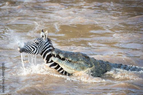 rivercrossing / flußüberquerung - masai mara Poster